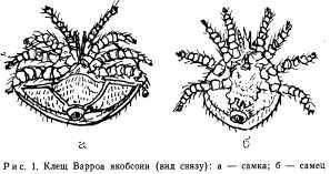 varroz-1.jpg