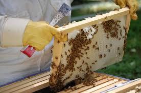 В следующем году пчеловоды Алтая рассчитывают на успех